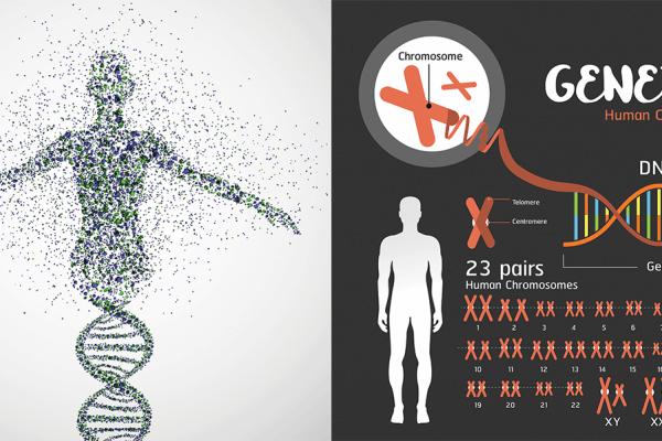 Tout ce qu'il y a à savoir sur l'ADN